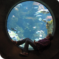Sylvia sits silhouetted in front of a circular aquarium window at the California Academy of Sciences